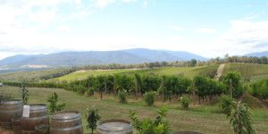 Dreamscape Tours - Winery Tours Christmas Functions 015