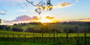 sunset on the best Yarra Valley wine tasting tours