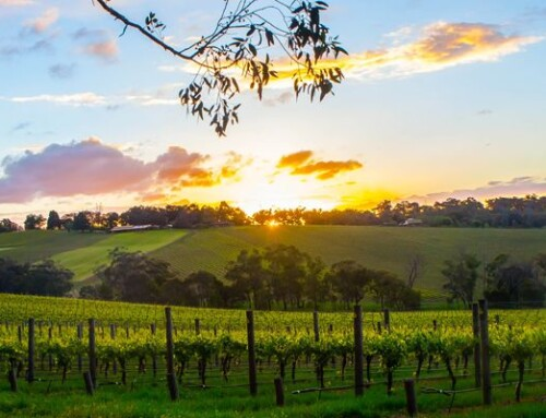 Planning The Best Winery Tour Celebration