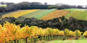 Dreamscape Tours - Winery Tours 071