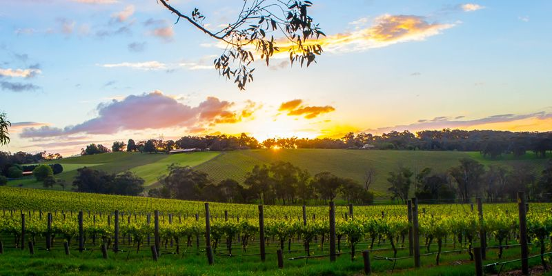 Party Bus Winery Tours Yarra Valley